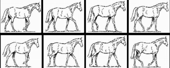 Свободный шаг лошади.