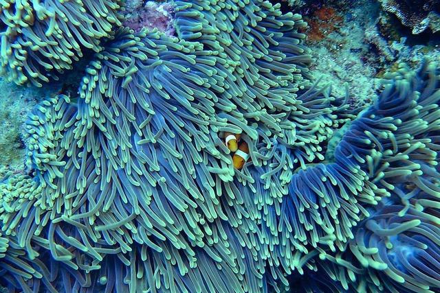 corals.jpeg