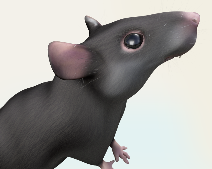 rat_closeup.png