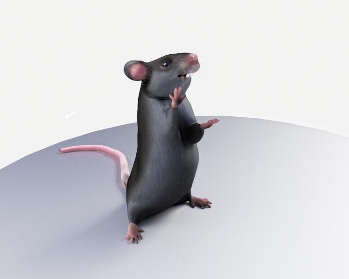 rat_hi.png