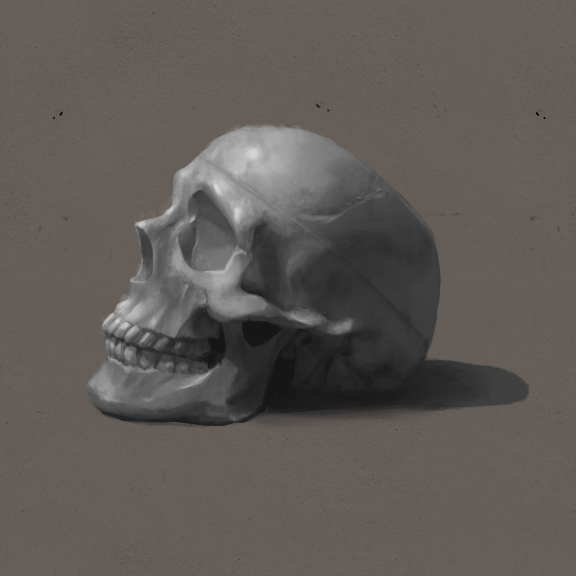 skull_by_bellumwst-d9mbzio.jpg
