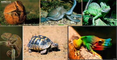 животные.jpg